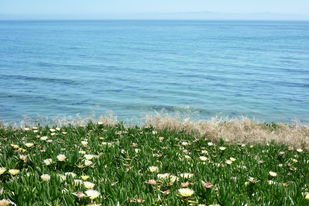 Pacific Coast Flowers, California